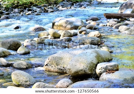 Calm water in the forest - stock photo