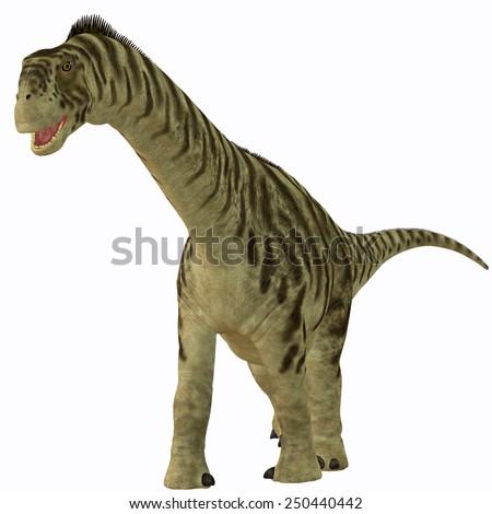 Camarasaurus Juvenile on White - Camarasaurus was a sauropod herbivore dinosaur that lived in the Jurassic Era of North America. - stock photo