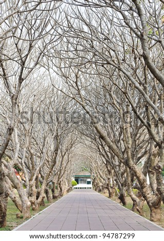 Camber of bare tree on the way of rural park. - stock photo