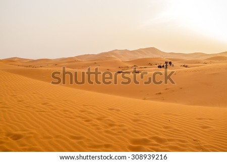 Camel caravan and sand dunes in Merzouga, Morocco, at sunset