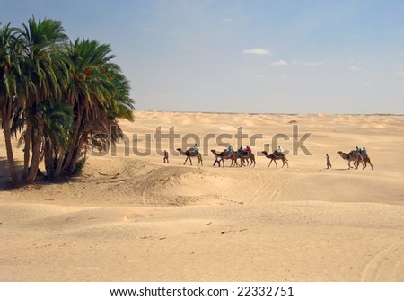 Camel caravan comes to oasis - stock photo