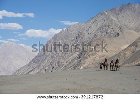 Camel caravan going through the sand dunes - stock photo