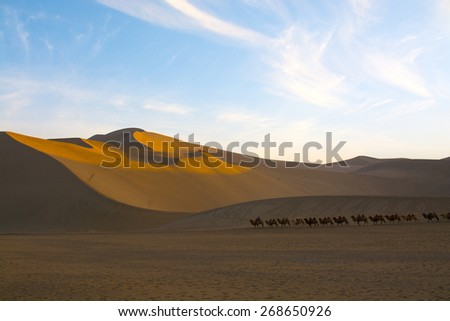 Camel caravan going through the sand dunes in the Gobi Desert, China - stock photo