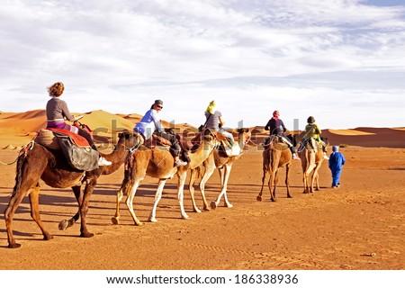 Camel caravan going through the sand dunes in the Sahara Desert, Morocco - stock photo