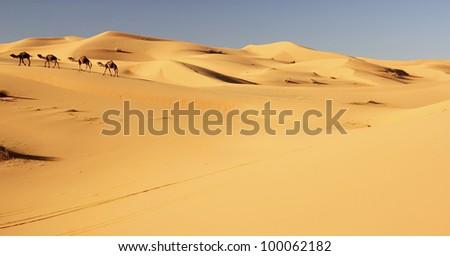 camel caravan in the sahara desert - stock photo