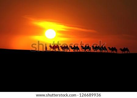camel caravan with sunset - stock photo