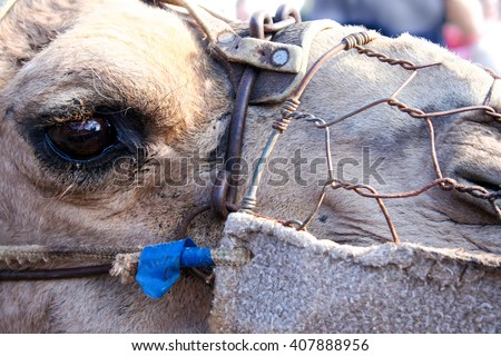 stock photo camel head closeup eye with rusty wire harness 407888956 portrait camel harness stock images, royalty free images & vectors Wire Harness Assembly at readyjetset.co