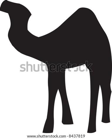 Camel illustration - stock photo