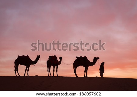 Camel in desert sunrise - stock photo