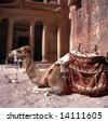 Camel in front of Treasury Petra Jordan.This is an UNESCO World Heritage site - stock photo