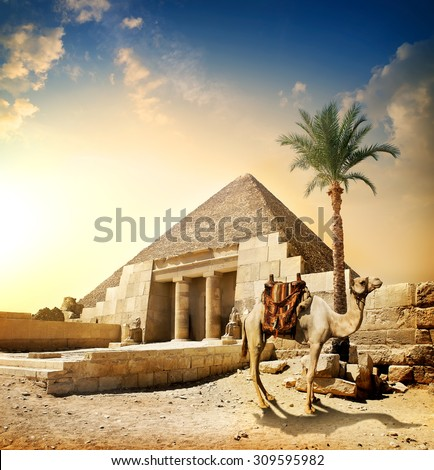 Camel near pyramid and columns with statues - stock photo