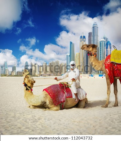 Camel on Dubai Beach, United Arab Emirates