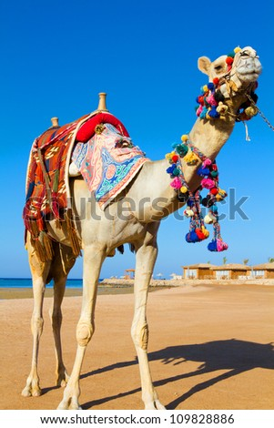 Camel on the background of the blue sky.