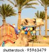camel on the beach - stock photo