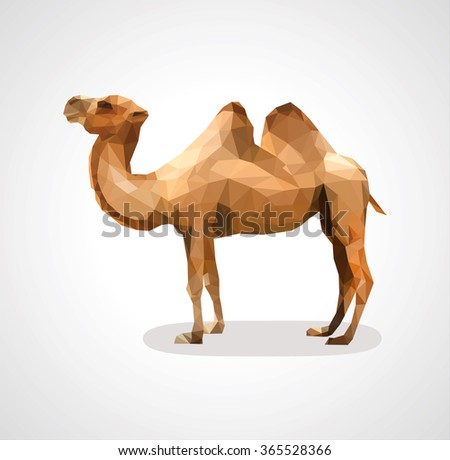 camel polygon