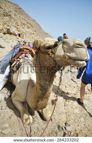 camel resting on the rocks - stock photo