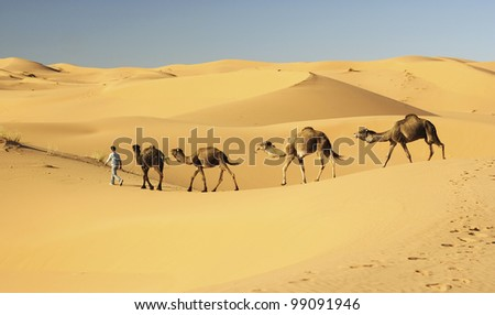 Camel's caravan in the Sahara desert - stock photo