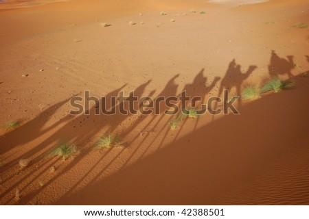 camel shadow on the sahara desert - stock photo