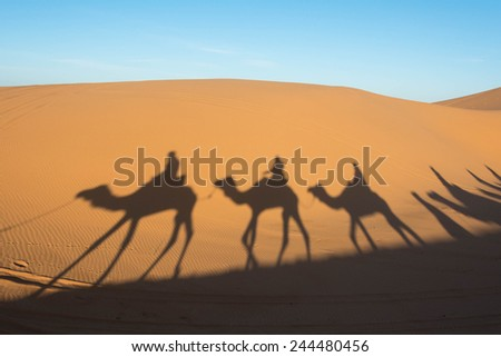 Camel shadow on the sand dune in Sahara Desert - stock photo