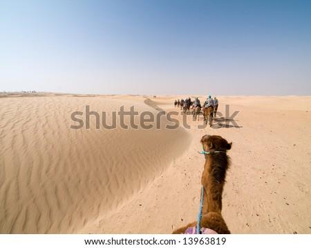 Camel Trip in Tunisia; - stock photo