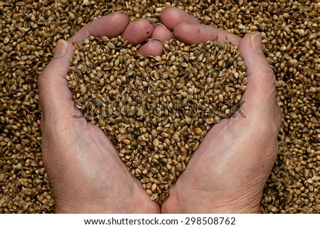 Camelina sativa seed, a genetically-modified cereal crop that produces fish oil - stock photo