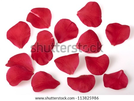 Camellia flower petals - stock photo