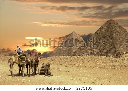 Camels and Pyramids - stock photo