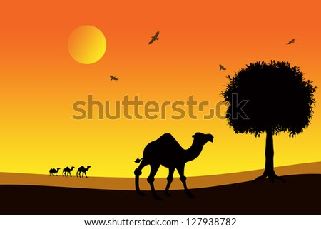 camels at sunset in the desert - stock photo