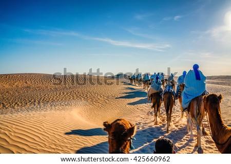 Camels caravan going in sahara desert in Tunisia, Africa. - stock photo
