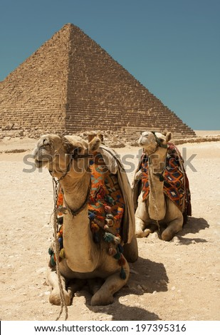 Camels in front of a pyramid - stock photo