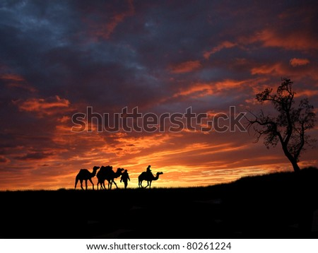 Camels in Sahara on orange sunset, illustration - stock photo