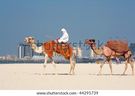 Camels on Jumeirah Beach, Dubai, UAE - stock photo