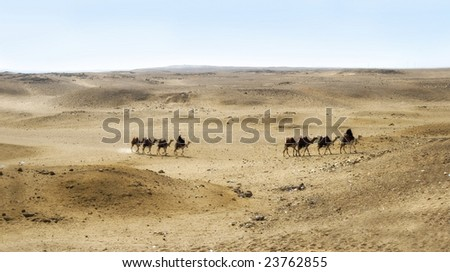 Camels with their handlers, pyramid guides in Cairo, Egypt - stock photo