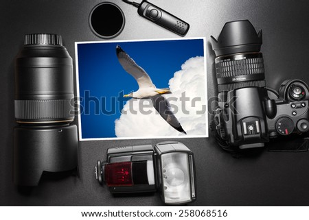Camera equipment around a printed photo of a seagull in the sky - stock photo