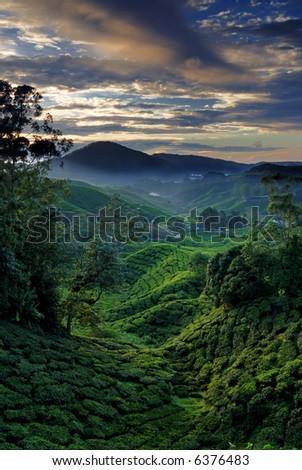 Cameron Highland at Dawn. Taken at Bharat Tea Plantation - stock photo