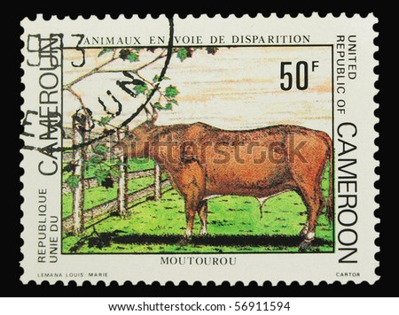 CAMEROON - CIRCA 1983: A stamp printed in Cameroon showing cattle, circa 1983