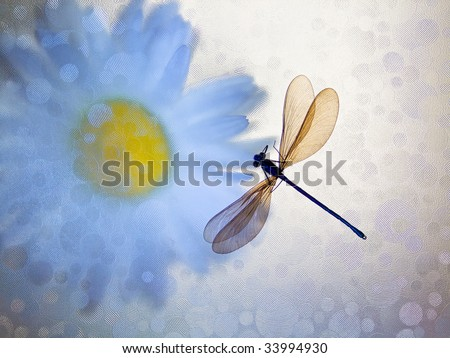 Camomile and dragonfly - stock photo