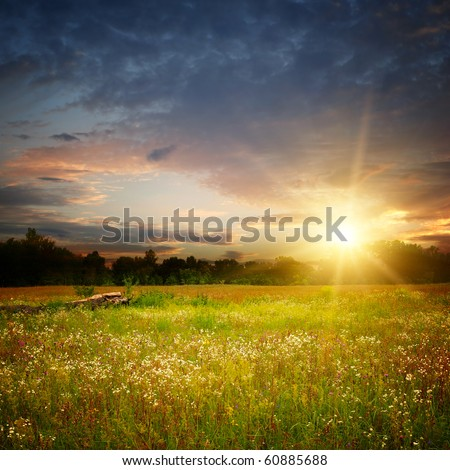camomile field and sunset landscape - stock photo
