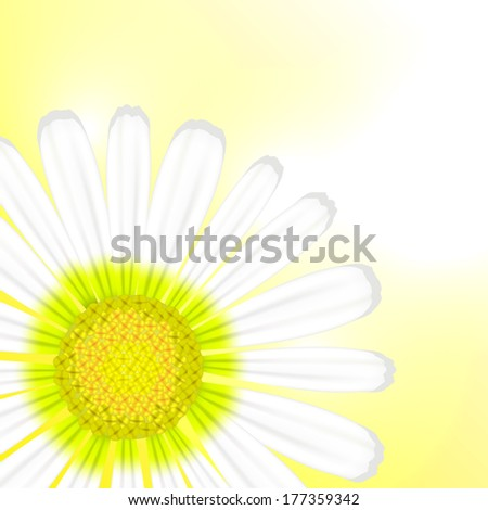Camomile flower illustration - stock photo