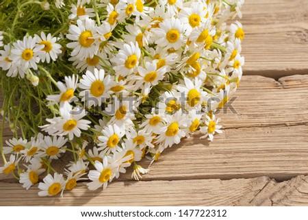 camomile flower on wood  - stock photo