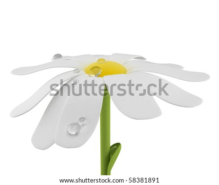 camomile flower with waterdrops - stock photo