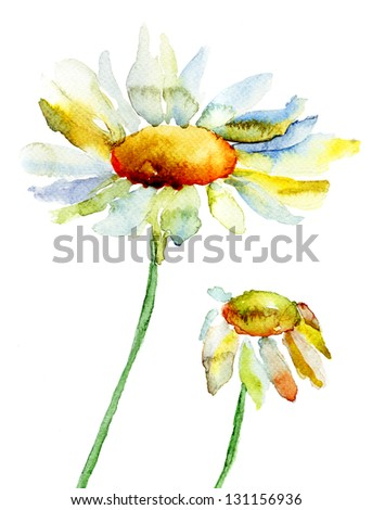 Camomile flowers, watercolor illustration - stock photo