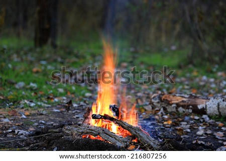 Camp fire in autumn forest - stock photo
