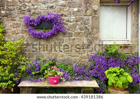 Campanula flowers on granite house wall in Locronan village, Brittany, France