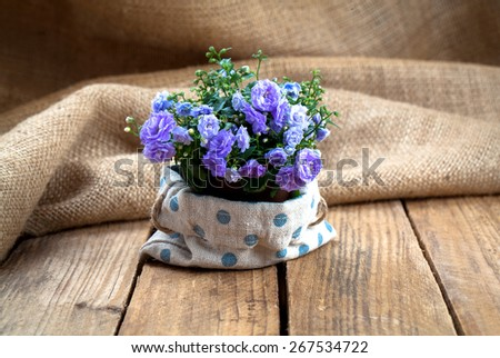 Campanula terry flowers in paper packaging, on sackcloth, wooden background - stock photo