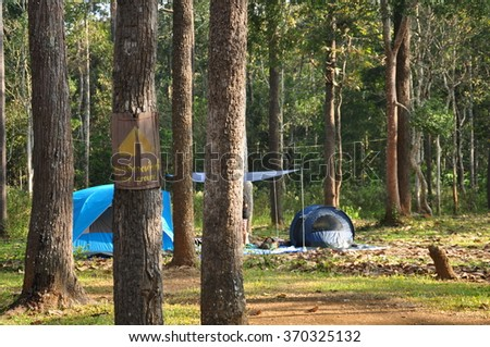 Camping in pine forest in national park, Thailand - stock photo