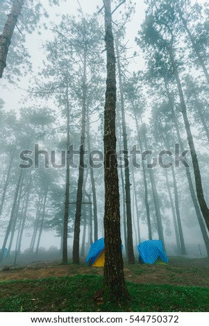 Camping Tents in Fog Doi Ang Khang National Park Chiang Mai Thailand