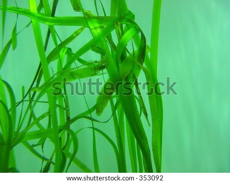 Can you spot the sea life? - stock photo