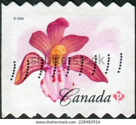 CANADA - CIRCA 2006: Postage stamp printed in Canada shows a flowering Corallorhiza maculata, circa 2006 - stock photo