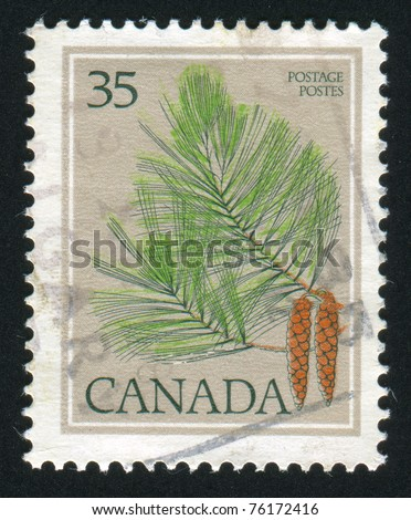 CANADA - CIRCA 1979: stamp printed by Canada, shows pine-tree, circa 1979